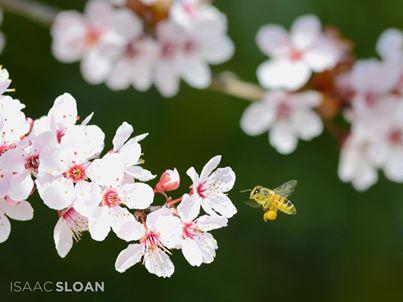 flowers-bee